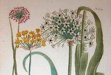 Art - Botanical, maps, etc