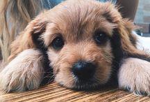 Adorable Animals / by Christina Simpson