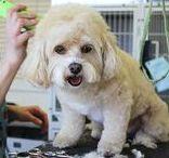 Toelettatura animali domestici / Qui puoi trovare contenuti utili come guide, video e foto sulla cura e la bellezza degli animali domestici