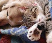 Educazione Animali domestici / Qui troverai contenuti utili sull'addestramento e l'educazione degli animali domestici