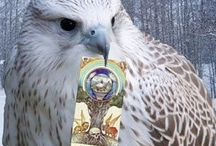 Falcon Cloak Tarot blog posts / All things Tarot and some posts with Oracles and Runes as well.