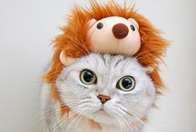 Kitties 'n Things