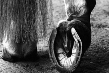 Photography Horses
