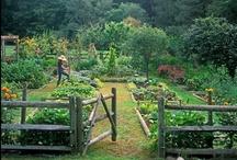 home garden. / by . Julia .
