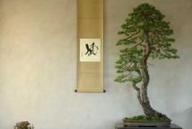 BONSAI / I have been practicing the art of bonsai for over 20 years, why have I not had a bonsai board before today ?
