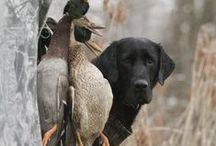 Ducks, Dogs & Feathers  / I Love Ducks, Dogs and Duck Hunting !