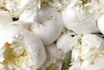 Blooms / Gorgeous blooms. Flower bouquets.