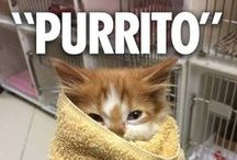 Purrfect Cat Memes