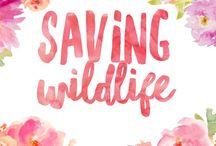 Saving Wildlife / Ways to save wildlife