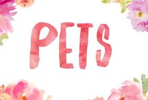 Pets / Information and advice about pets and animals