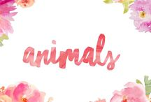 Animals / For everything animal related!