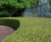 Lawn and Tree Care / TenderCare's Lawn Program provides six lawn applications. Your trees and shrubs represent a growing investment that's worth protecting.