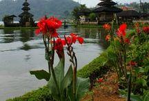 Bali Inspiration / Bali ist ein Paradies in Indonesien - tolle grüne Landschaft, healthy Food, Kutltur und vieles mehr!