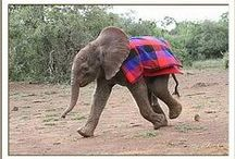 The DSWT // Our Rescues / Orphaned elephants and black rhinos rescued by the charity. / by David Sheldrick Wildlife Trust