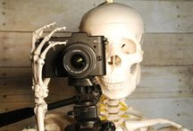 Skeleton Photgraphy and Skulls / by Polkadot Magpie