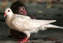 funny animal friendships / by Jennifer