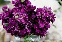 417 Bride: Radiant Orchid / All things lovely in the shade of Pantone's radiant orchid