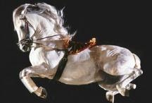 Horse / by Suzy Stelmaszek