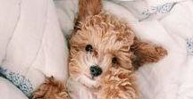pet wellness. / dog stuffs.