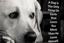 Dogs / by Tracey Bindner
