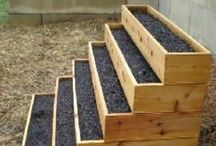 Gardening Ideas / by Lindsey Douglass