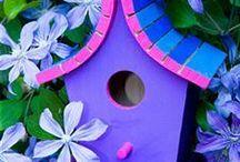 bird houses / nests