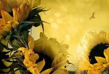 SUNFLOWERSandDAISIES / WONDERFUL FLOWERS