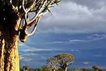 AFRIKA Reisen  [Gruppenbord] / Das ist ein deutschsprachiges GRUPPENBORD mit Tipps & Informationen rund um Reisen nach AFRIKA: Menschen & Kulturen, Natur, Landschaft & Tiere, tolle Bilder, traditionelles Essen und natürlich alles über das Abenteuer Safari. | Um teilzunehmen, folge dem Board und sende mir eine Direktnachricht. Bitte nur vertikale Pins. Happy pinning!