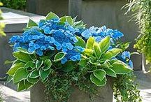 Container Gardens / Creative gardening in containers.