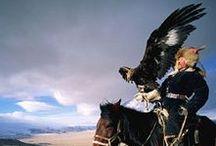 MONGOLEI | Reisen / Bilder & Inspirationen rund um die faszinierende Mongolei: die Menschen, die Landschaft, das Reisen durch die weite Steppe, das Essen und das Leben in den Jurten. [Wer schon in der Mongolei war und mitpinnen möchte, folgt bitte dem Board und sendet mir eine Direktnachricht.]