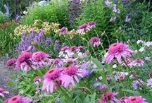 Flowers / colourful gardens