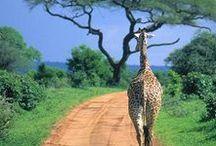 Tansania | Tanzania / Ich glaube, ich muss hier mal ganz gewaltig in Luftsprünge verfallen: im Januar erfülle ich mir den unglaublichen Traum einer Reise nach Tansania. Da Vorfreude bekanntlich die schönste Freude ist, sammle ich hier schon mal die wundervollsten Inspirationen zu dem Land in Ostafrika.
