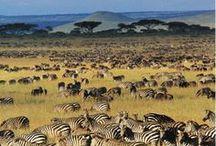 TANSANIA | Reisen / Im Januar 2017 konnte ich mir den Traum erfüllen, nach Tansania zu reisen. Hier sammle ich die schönsten Inspirationen zu dem Land in Ostafrika.
