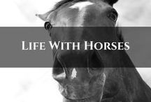 My Life With Horses / Snippets of all things horse. From building our lifestyle block to riding.