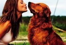 Dogs / For dogs lovers