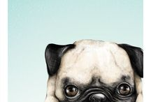 Pugs / For pug lovers❤️