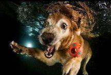 Dogs underwater