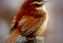 madárkás