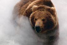 Bear ♥️