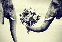 Elephants are my Luv