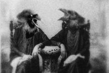 ravens/crows/black birds