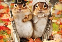 Thanksgiving/Fall / by Polly Morgan