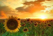 Sunrise, Sunset,... / by Pj Martin