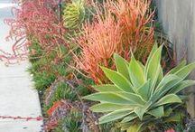 Garden Ideas / by Christiana Da Silva