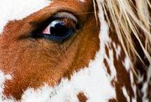 The Painted Ponies / Home to #ThePaintedPonies