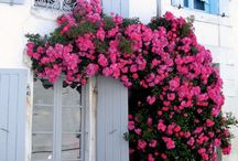 Pink climbers