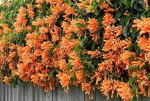 Orange climbers