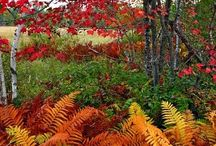 Ferns; Shade - partial shade