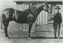 Quarter Horse History / Become a Quarter Horse history expert! / by American Quarter Horse Association (AQHA)