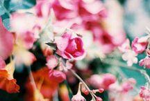 *flower power* / by Daniella Gonzalez
